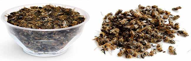 Как пить пчелиный подмор на водке